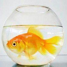 Mr Fishey