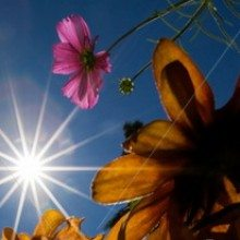 stock-photo-bright-sun-flowers-shot-from-below-with-wide-angle-lens-15760255
