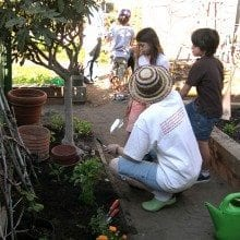 School Gardens Teach Sustainable Organic Living