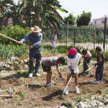 Community Gardening With Common Ground