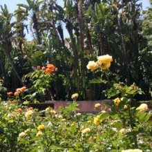 Lotusland garden, compost
