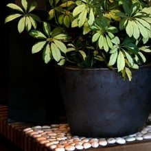 Clear The Air With Houseplants: 6 Tips for Your Healthy Indoor Garden