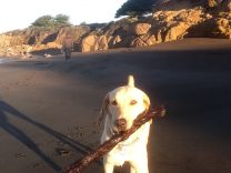 Travels with Journey off leash