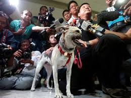 Kabang is greeted by the press in her native home in the Philippines. She is a true hero and Poster Dog to help stop animal cruelty.