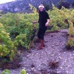 Harvesting in Abruzza
