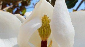 Croen Jewel Flower BH