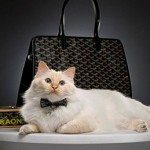 lbp_gallery_cats_1200_fa_raon_bag