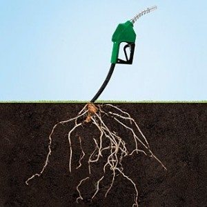 ethanolo, biomass, biofuel, renewable energy