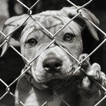 dog_puppy_in_shelter_cage_270x224