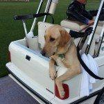 Journey foul play golf cart