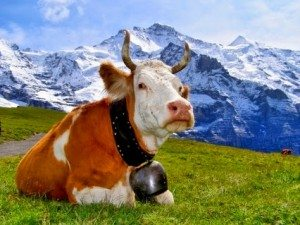 SwissCow.Alpine